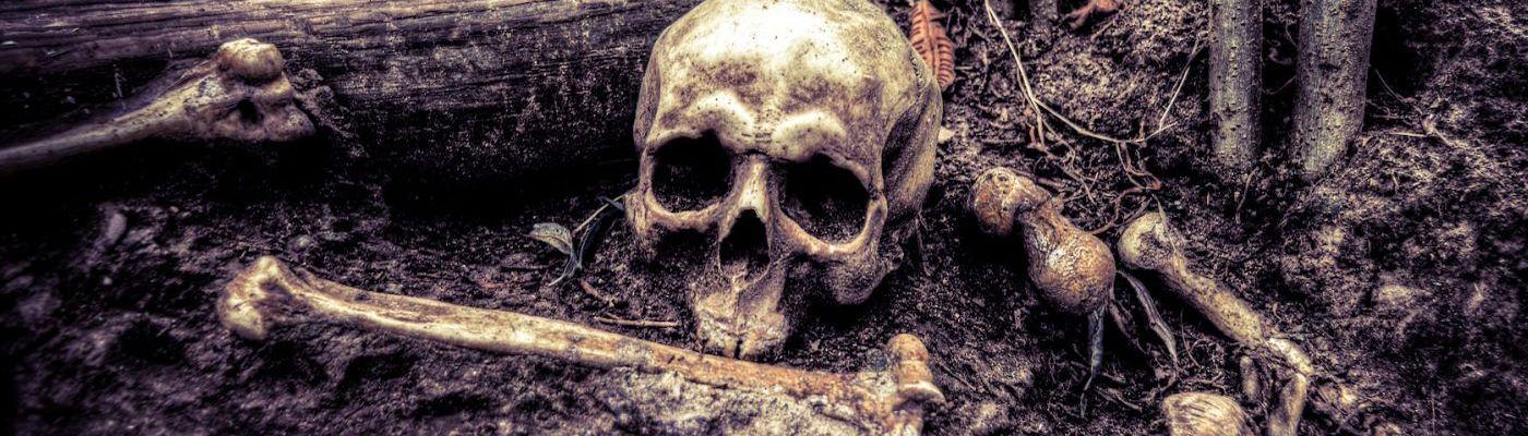 Totenschädel und Knochenteile im Wald auf dem schlammigen Boden.